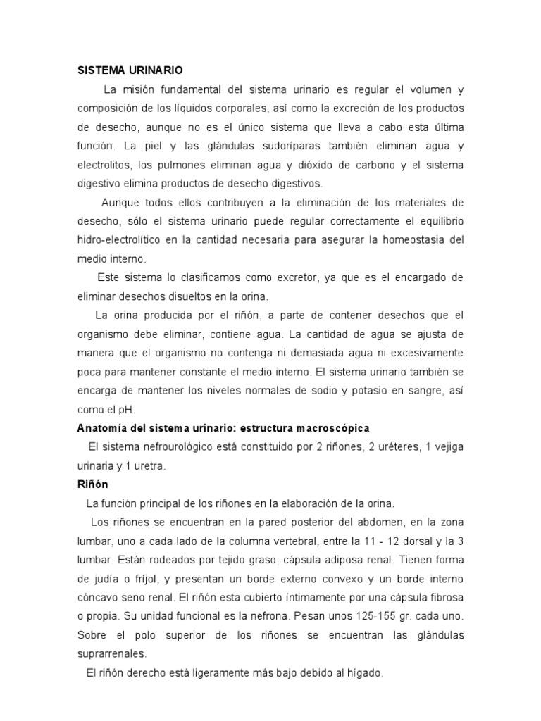 SISTEMA URINARIO 1