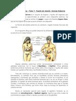 Ciencias NII - T7 - Sistema Endocrino- Versión resumida