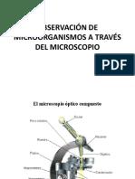 2.- OBSERVACIÓN DE MICROORGANISMOS A TRAVÉS DEL MICROSCOPIO (1)