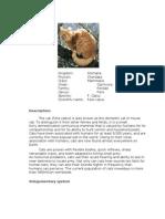 Cat's info