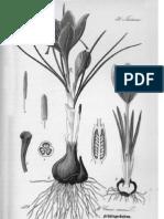 Professor de Botânica (primeiro capítulo)