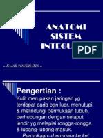 ANATOMI     SISTEM INTEGUMEN