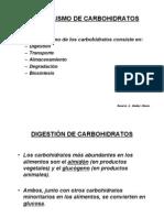 metabolismo-de-carbohidratos1