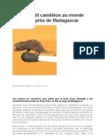 Le plus petit caméléon au monde découvert près de Madagascar