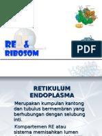 Ribosom