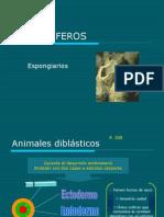 Filo_PORIFEROS(1)