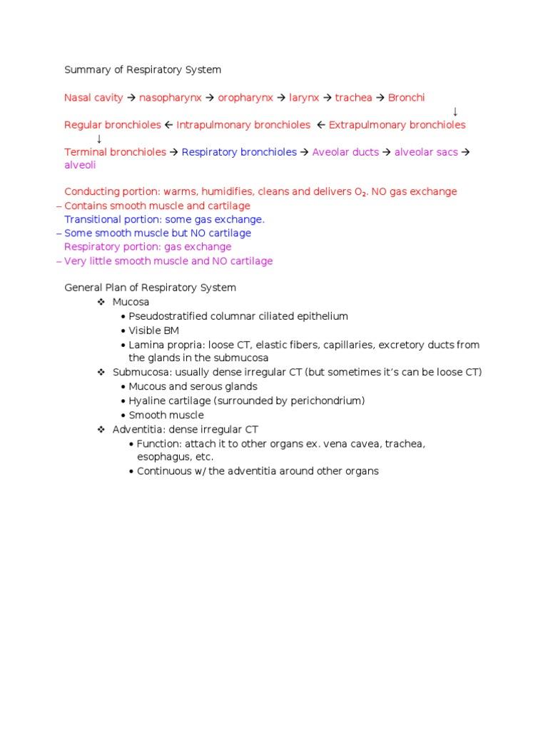 Summary Of Respiratory System Epithelium Lung