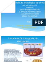 Expo Sic Ion de La Cadena de Transporte de Electrones