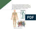 A drenagem linfática manual é um método utilizado para estimular o sistema linfático