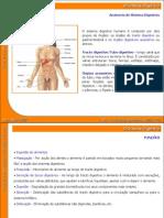 04_sistema_digestivo