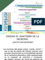 Expo de Anatomia Funcional