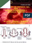 Organos de Los Sentidos2.Chiclayo
