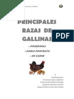 Principales Razas de Gallinas