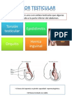 Dolor Testicular