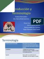Introducción y terminología clase remo I