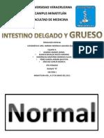 Intestinos Delgado y Grueso