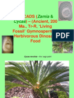 CYCAS Reduced