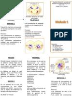Meiosis 1 Triptico