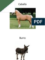 Vocabulario con imagenes reales
