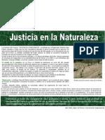 Reforestación- avance 2006
