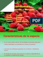 7Frambuesas-ExposicionEspecialista