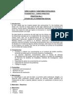 Manual de Citogenetica Humana N. Wiener 2010