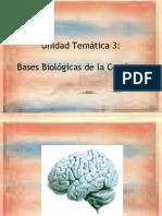 URPunidad 3 Bases Bioligicas