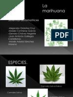 Efectos Biológicos de la Marihuana