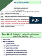 T11T12 (1)