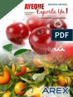 Revista Virtual 1