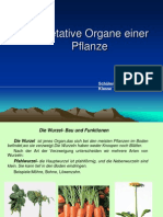 Organele Vegetative Ale Unei Plante Germana 1