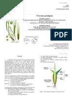 TP Bi514 Physiologie Vegetale (2005-2006)