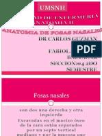 Anatomia de Fosas Nasales