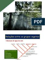 3ª_série_EM_Aula_1_-_Reino_Plantae_-_Gimnospermas_e_Angiospermas