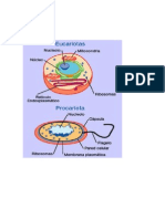 Celula Pro Car Iota y Eucariota Difrencias