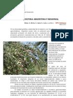 Olivicultura Argentina y Regional