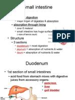 Digestive System Part B