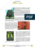Arce (Acer sp.)