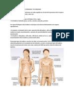 Caracteristicas Sexuales Primarias y Sec Und Arias