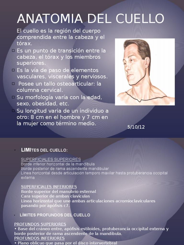 Anatomia Del Cuelloexpo