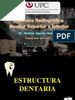 6. Anatomía Radiográfica Intraorales y Extraorales