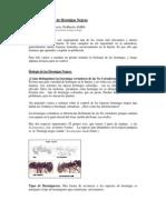 Control Biologico de Hormigas