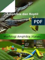 Amhibia Dan Reptil