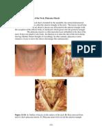 12 Larynx III