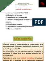 Clase Unidad 6 Mitocondria Mayo 07