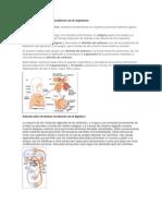 Circuito Respiratorio : Medicalexpand dispositivos medicales respiratorios profesionales