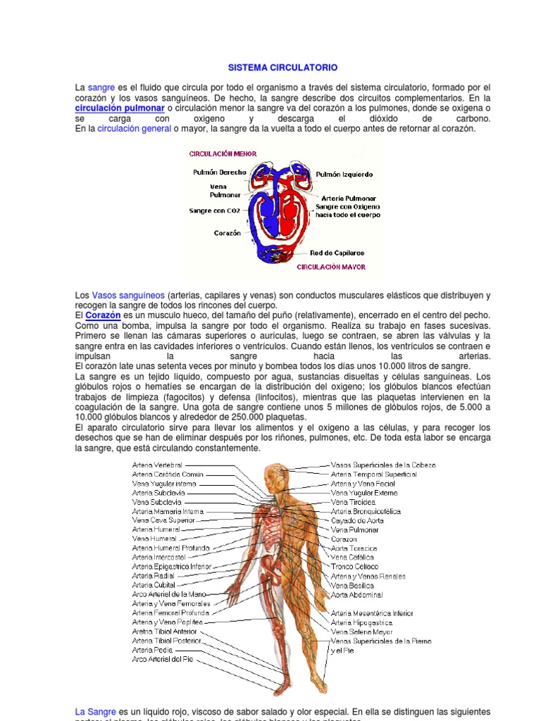 Circuito Sanguineo : Sistema circulatorio modifi