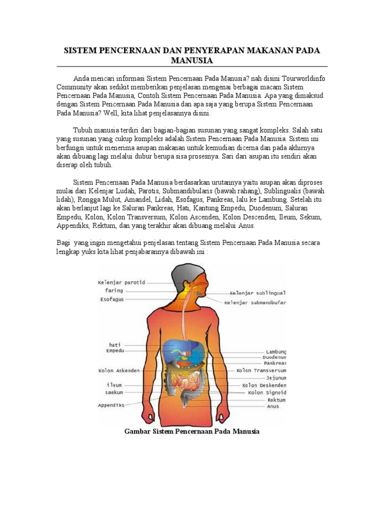 Sistem Pencernaan Dan An Makanan Pada Manusia