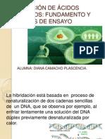 HIBRIDACIÓN DE ÁCIDOS NUCLEICOS