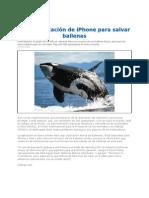 Crean_aplicación_de_iPhone_para_salvar_ballenas